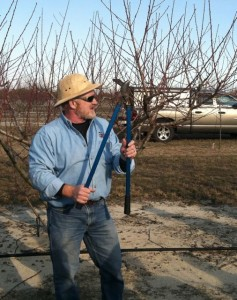 Dr. Mike Parker demonstrates pruning peach trees